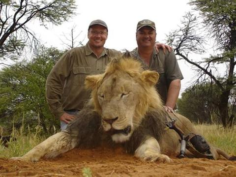 Lion-killer the worst dentist in America? Not by a long shot
