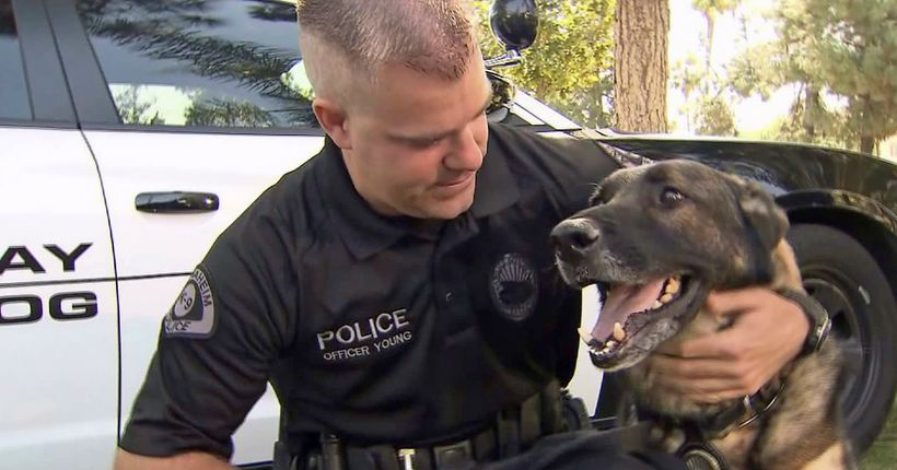 Top 10 Heroic Crime-Fighting Dogs