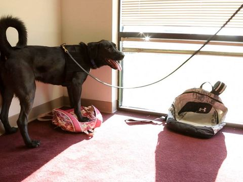 Meet the Rescue Dog Who Sniffed Out Evidence in the Fogle Case