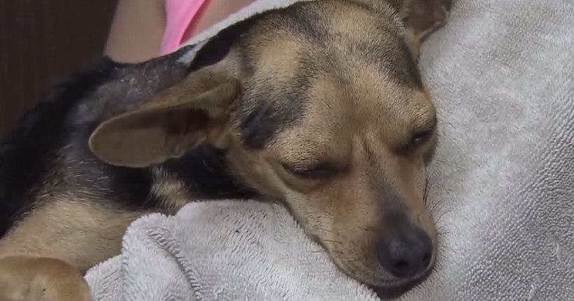 9th SoCal dog is found suffering from chemical burn injuries; reward up to $50,000
