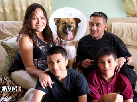 Hero dog takes bullets for family; Internet raises medical funds