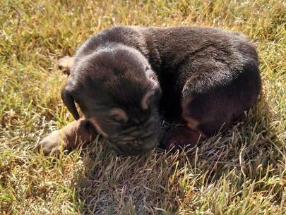 ALIE Pup Name 1