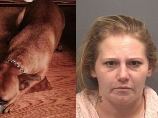 N.C. woman found guilty after taping dog's mouth shut, posting photos to Facebook