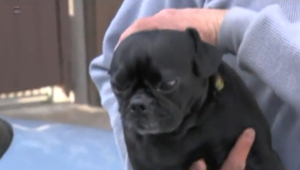 Missing pug returned to woman seen throwing him in viral video