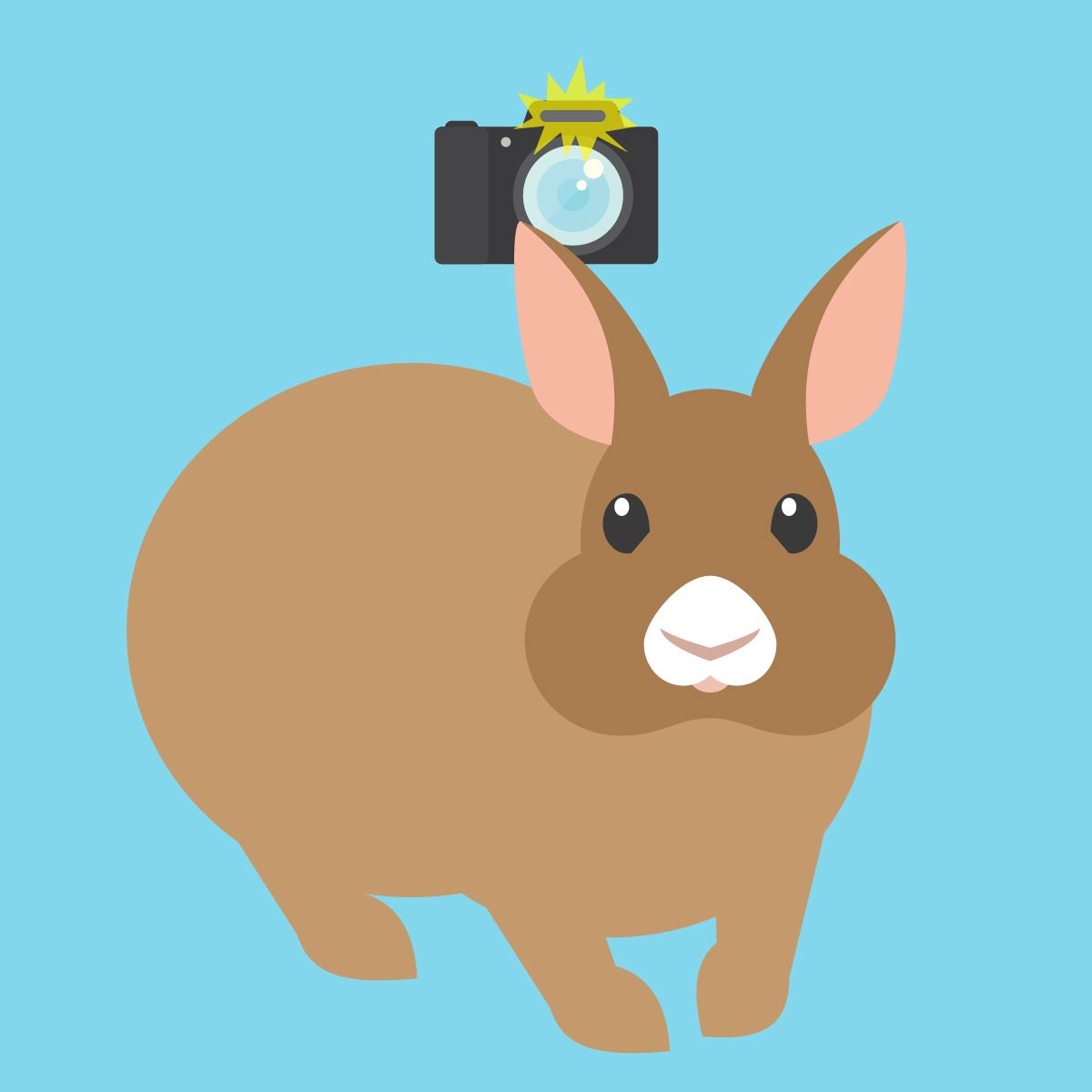 rabbitCamera