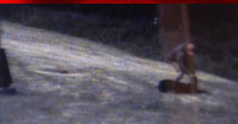 Minnesota deputy keeps job after video shows him beating K9 partner