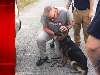 Wounded K-9 found alive 2 days after fatal deputy shooting