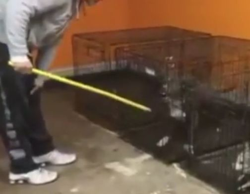 Man seen in viral alleged dog-abuse video faces more charges