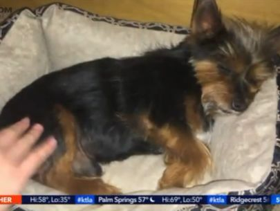 Community residents outraged after family dog shot dead