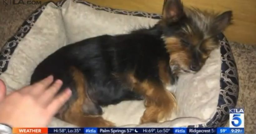 Residents in Riverside County community outraged after family dog fatally shot
