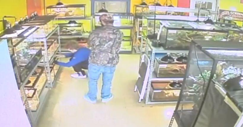 Thieves swipe boa constrictor from St. Clair County pet store