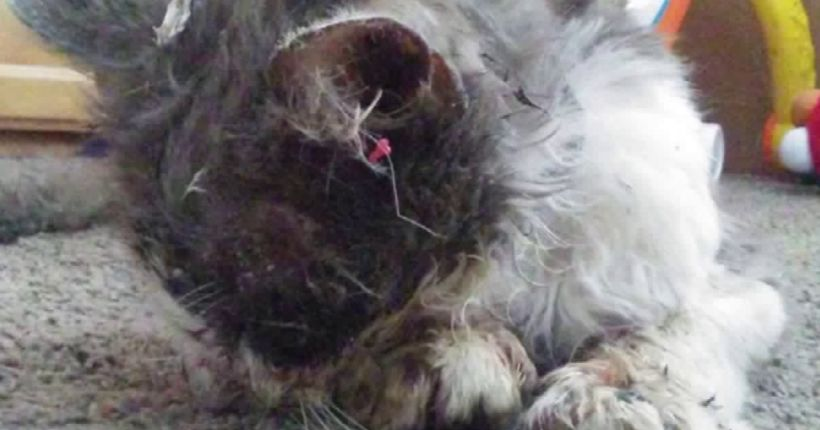 'Disgusting and frightening': $5,000 reward offered in case after cat tortured