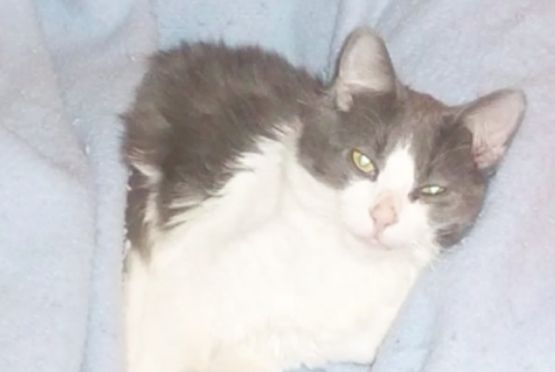 More than 150 attend vigil for tortured cat; reward grows to $47K