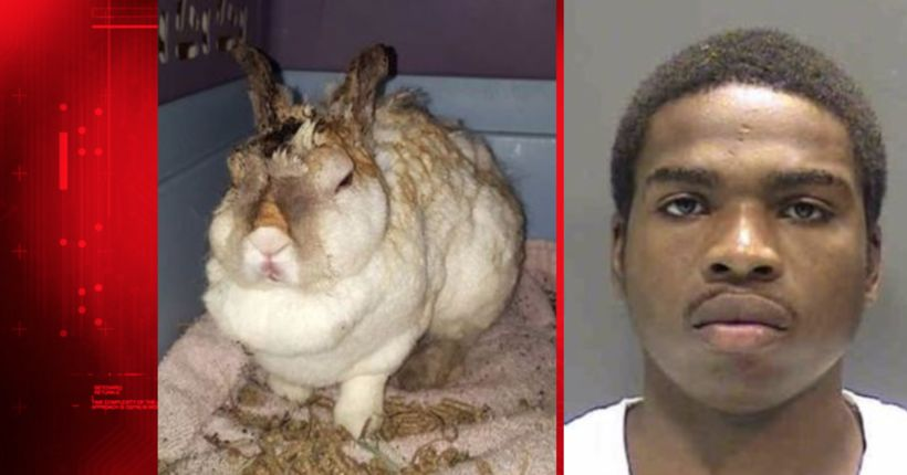 Man convicted of aggravated animal cruelty for intentionally burning rabbit
