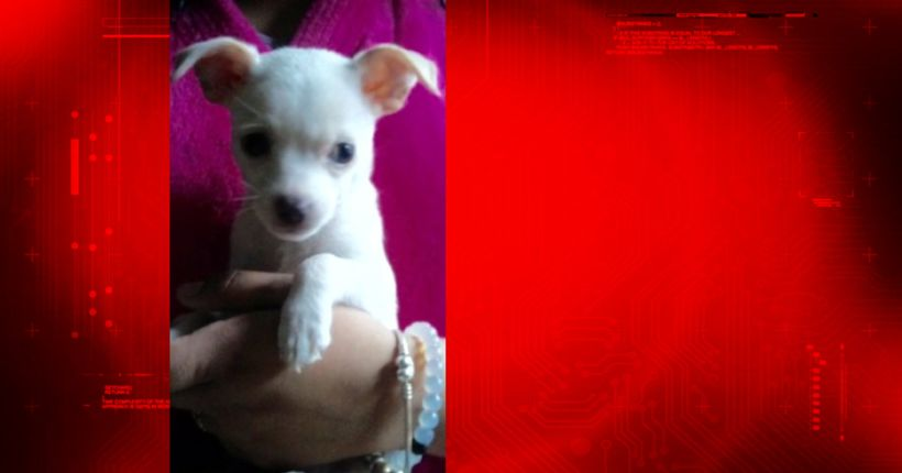Man found guilty of animal cruelty for murdering wife's puppy