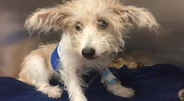 Puppy thrown from third story window in recovery