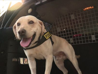 From shelter dog to crime fighter