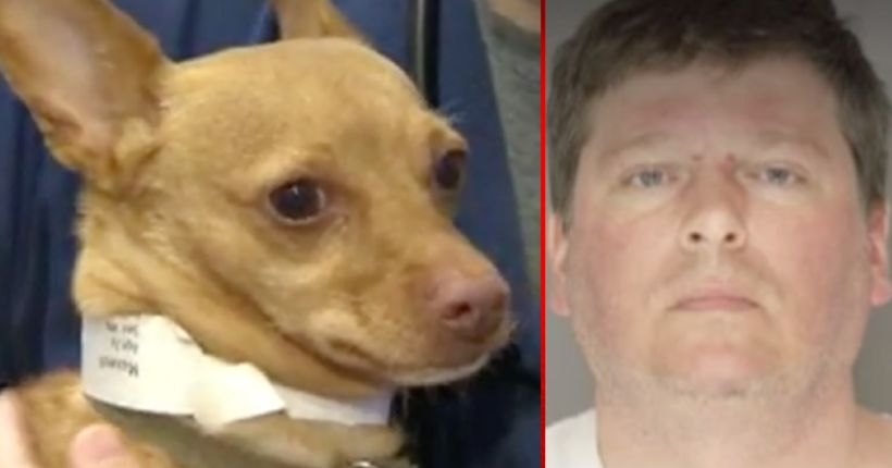 Man arrested after police found drunk dog