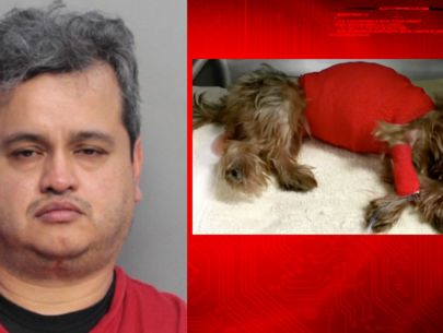 Man killed dog after she vomited in car: police