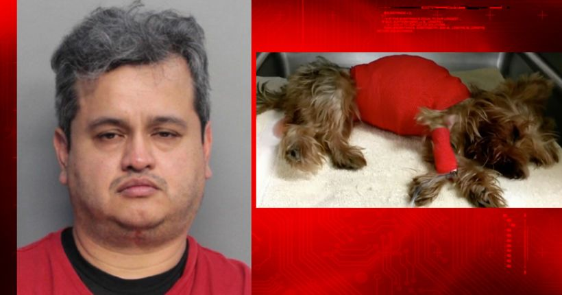 Man killed Yorkshire terrier after dog vomited in his car, police say
