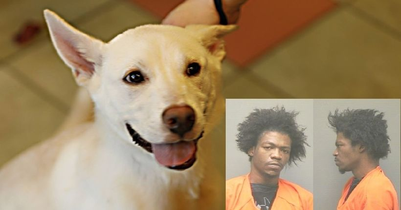 Police: officer saves dog after owner throws pup against window