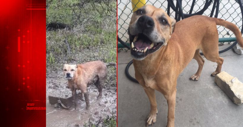Abused dog rescued after being chained to cinder block next to flooding lake