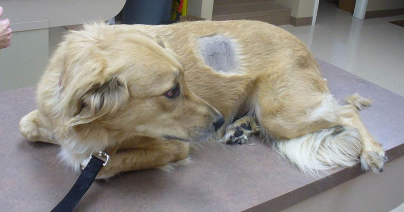 Drug addicts use their pets to score painkillers
