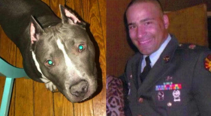 Men attack former Army Ranger in the Bronx, steal his service dog