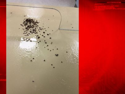 Man denied assistance releases around 100 bed bugs in city office
