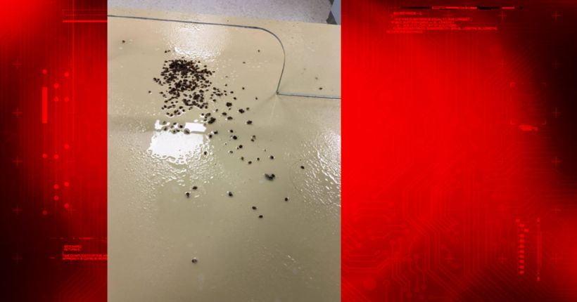 Angry man denied assistance releases around 100 bed bugs in city office
