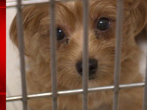 Couple accused of hoarding 170 dogs will get probation