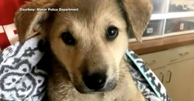Breaking windows to rescue dogs in hot vehicles soon will be legal in Colorado