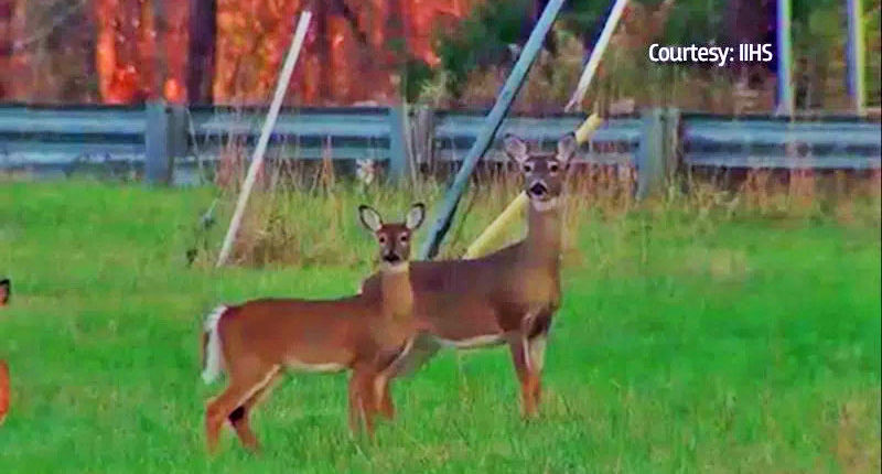 Charges of illegally transporting and selling deer parts are re-filed against Lititz couple
