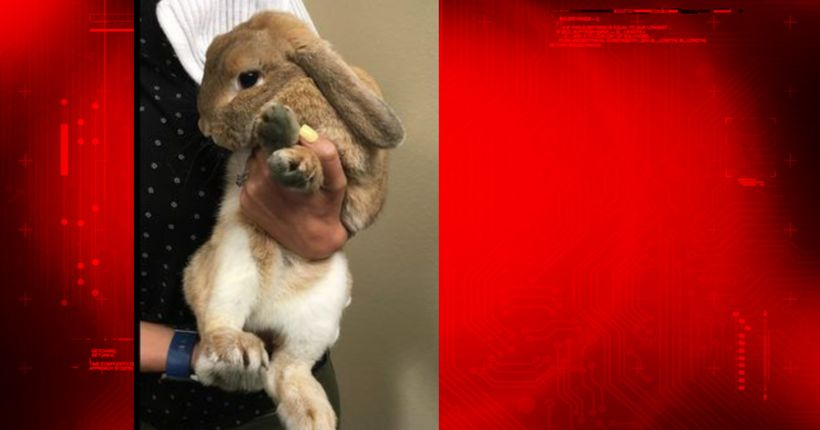 Police: Man throws pet rabbits against wall, kills them in front of 5-year-old boy