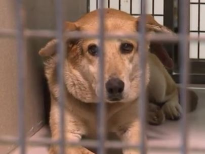 Dogs found living alone in home with feces-covered floors