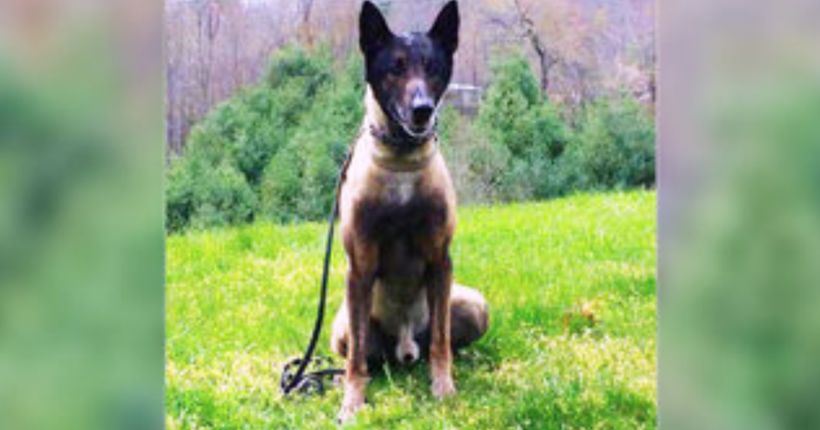 Reward offered after sheriff's office K-9 shot to death inside kennel