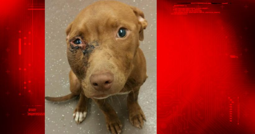 South Bend police looking for person who shot dog that later had to be euthanized