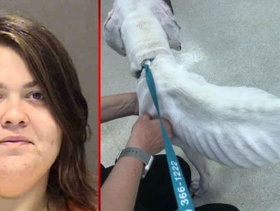 Woman charged after malnourished dog found