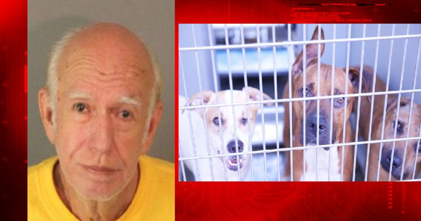 Arrest of man in connection with bank robbery leads to animal cruelty investigation involving 42 dogs