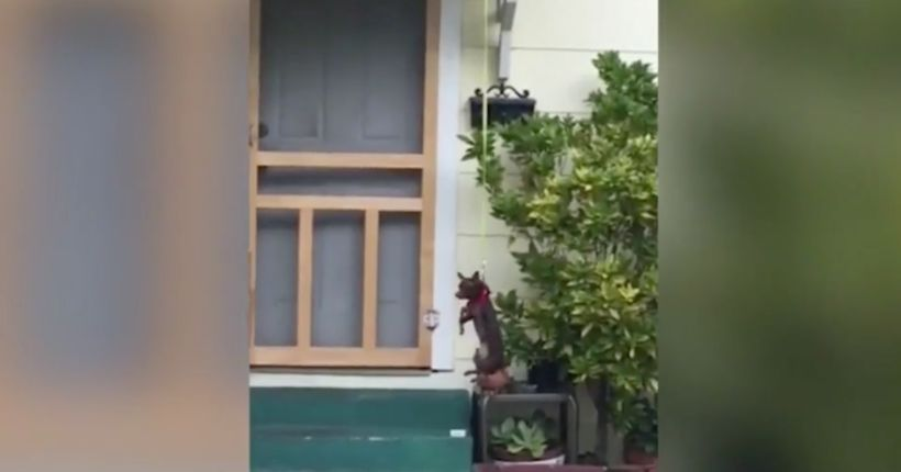 Neighbor's video of hanging Chihuahua prompts lawsuit