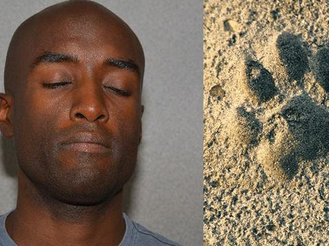 Navy veteran accused of poisoning, gouging dogs' eyes