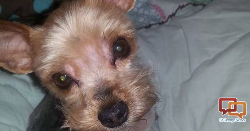 Man pleads guilty to killing Yorkshire Terrier in front of 12-year-old girl