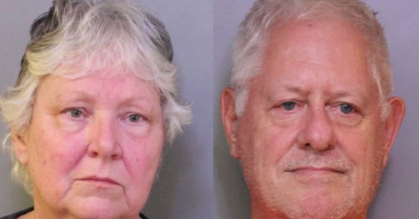 Neglected minihorses, dogs seized from veterinarian's home, deputies say