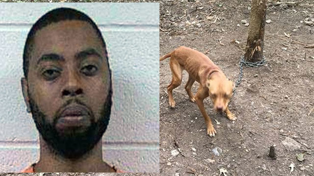 Man charged with 70 counts of animal cruelty