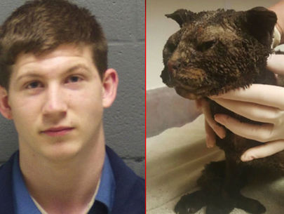 Indiana man gets 2 years probation for burning cat alive in field
