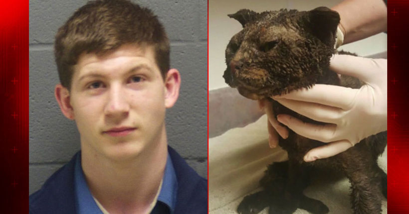 Man gets 2 years of probation for burning cat alive in Montgomery County field