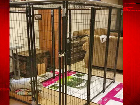 9-year-old girl locked in dog cage at home; 2 arrested
