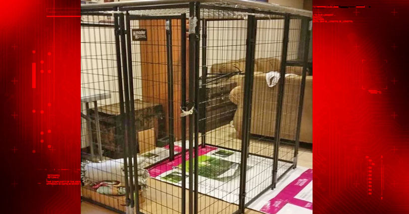2 arrested after investigators learn 9-year-old girl locked in dog cage at Racine County home