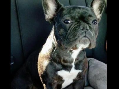 Man desperately seeking dog lost during tragedy on Strip