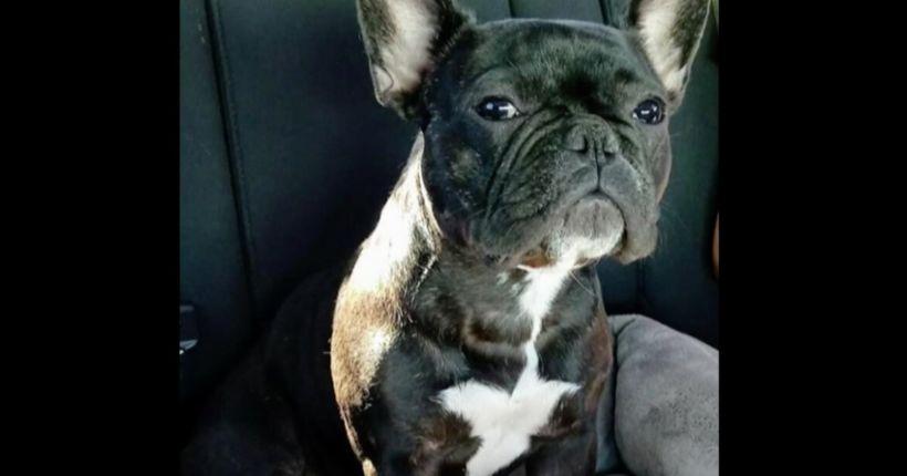 Man desperately seeking dog lost during tragedy on Las Vegas Strip